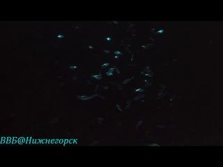«Тайны подводного мира» (документальный фильм, 2006) 2 часть